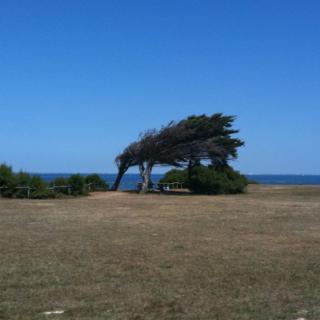 Ici, quand le vent souffle...