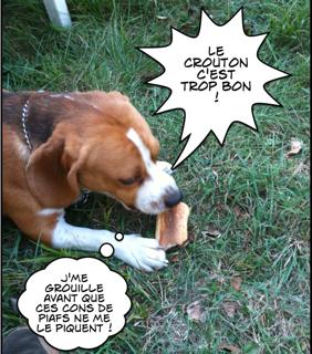 Pensée de Beagle